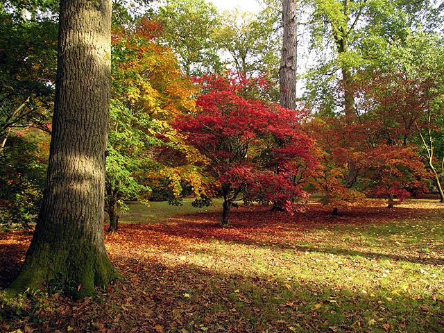 Sunrays and Acers at Westonbirt