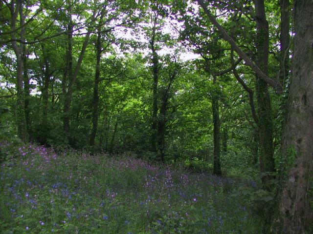 Widdicombe Woods