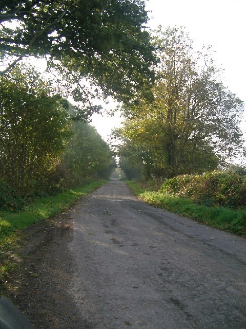 Trees lining the road near Grange Farm, Muthill
