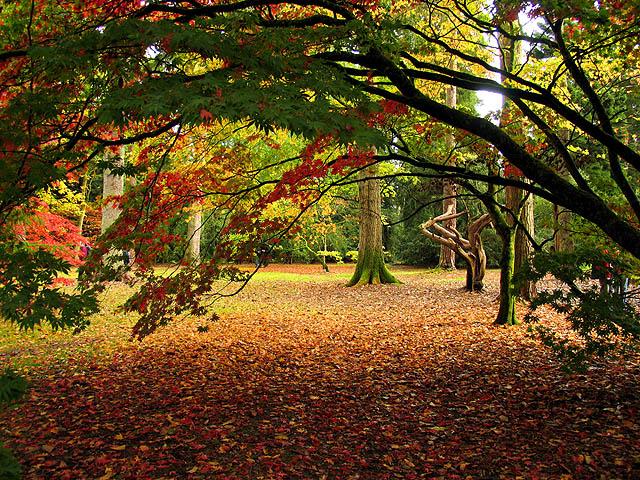 The Acer Glade: Westonbirt Arboretum