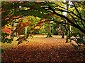 ST8590 : The Acer Glade: Westonbirt Arboretum by Pam Brophy