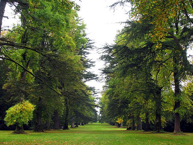 Jackson Avenue: Westonbirt Arboretum
