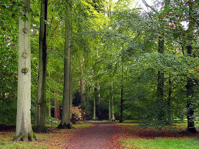 Loop Walk at Westonbirt Arboretum
