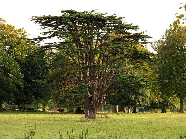 Beautiful Tree on the Westonbirt Estate