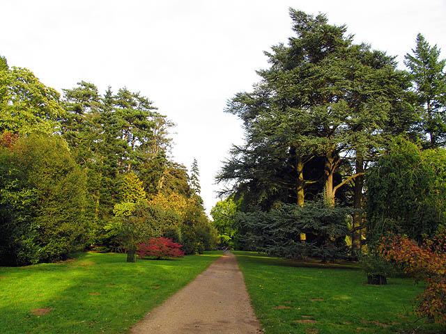 Mitchell Drive at Westonbirt Arboretum