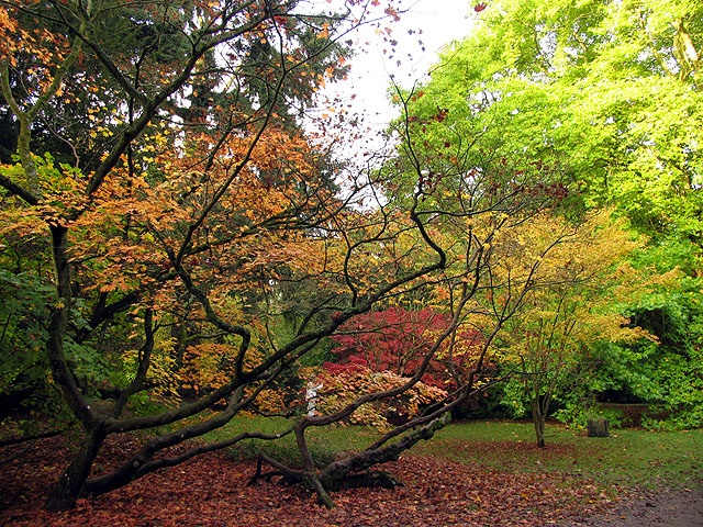 Hiding Amongst the Acers at Westonbirt