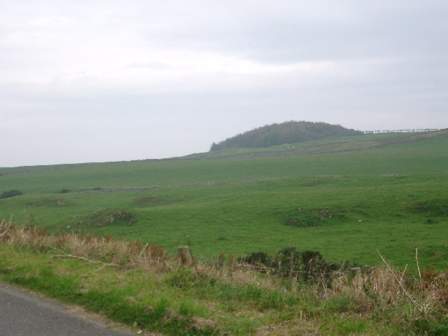 Senwick Wood on Knocktall Hill