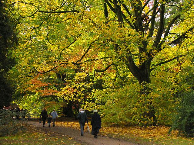 Main Drive: Westonbirt Arboretum