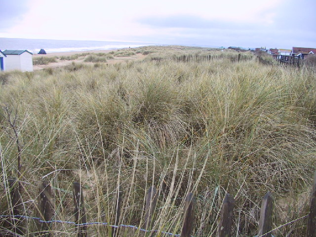 The Dunes south of Southwold