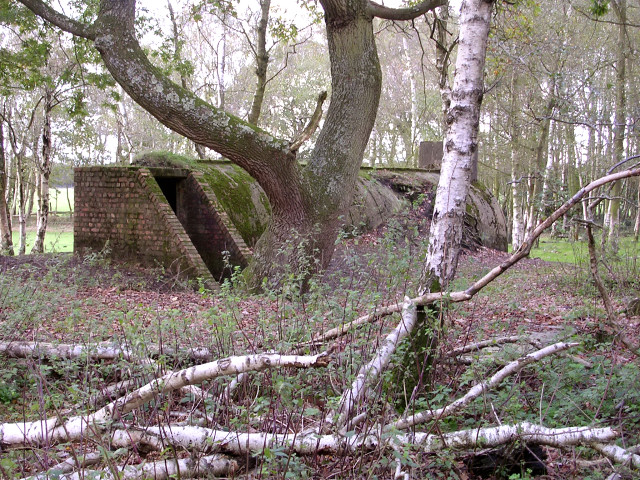 Disused air-raid shelter, Dilton Rough, New Forest