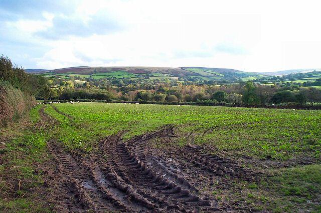 Field near Collihole - Dartmoor