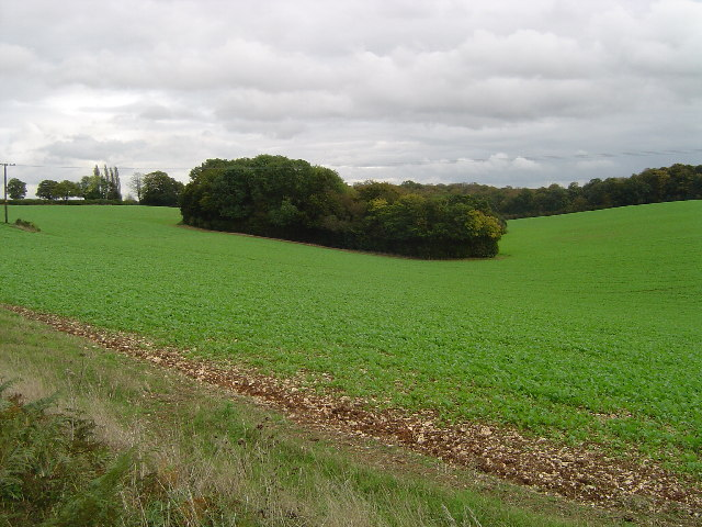 Chipperfield: Badgerdell Wood
