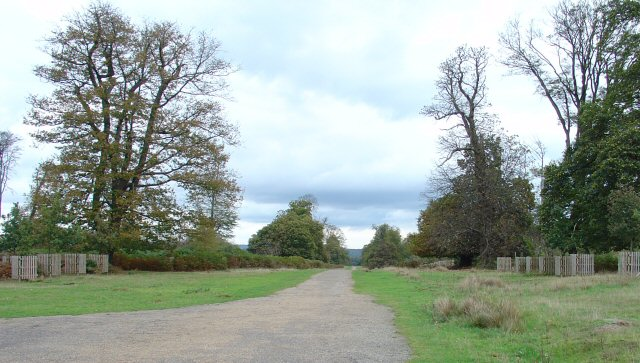 Chestnut Walk, Knole Park, Kent.