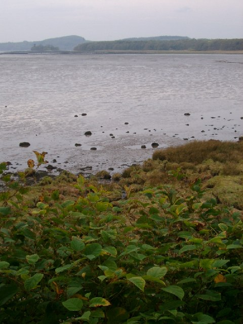 shore on Black Moray Plantation, Kirkcudbright