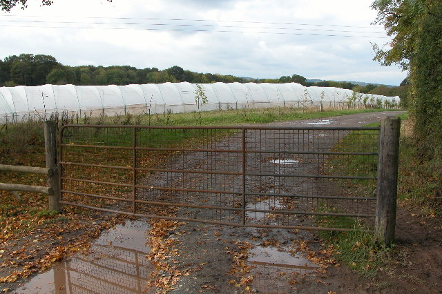 Polythene tunnels, Baregains Farm