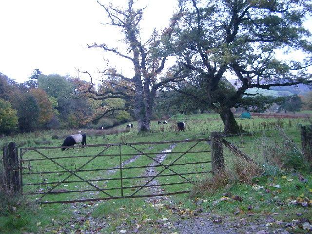 Belties, Greenside Farm, nr Dunscore