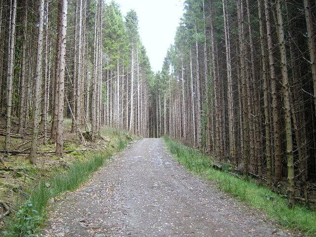Laggan Wood