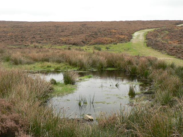 Seavy Pond