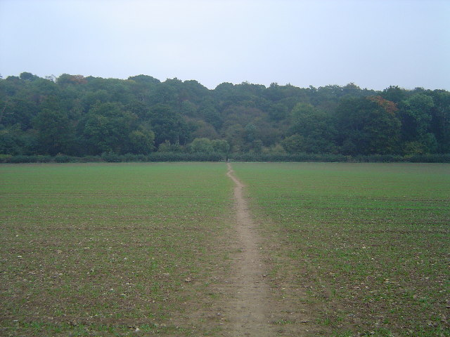 Watford: Whippendell Wood