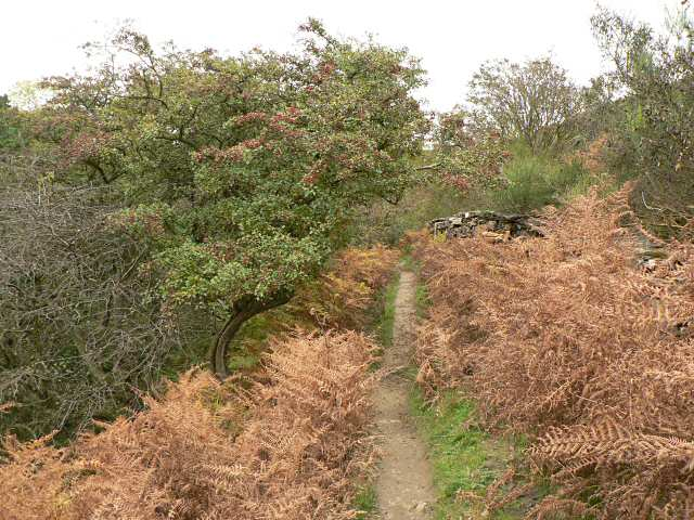 Path into the Hole of Horcum