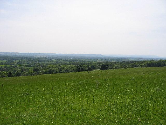 Bircher Common