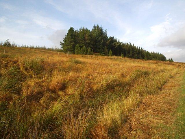 North Dalchork Wood