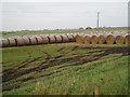TF5504 : By Newbridge Farm, Stow Bardolph Fen. by Dr Charles Nelson
