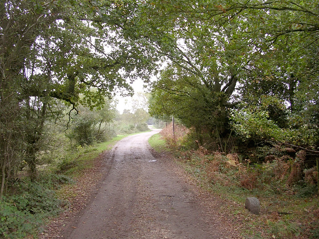 Track between Longdown Farm and New Farm, Longdown, New Forest