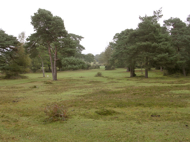 Edge of the New Forest east of Fox Hill