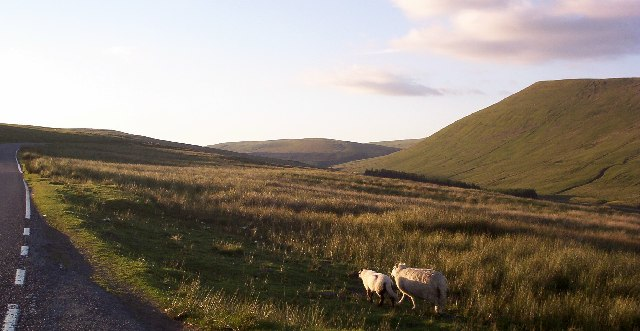 Wandering Sheep - Brecon Beacons