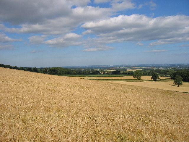 Field below Wapley Hill on the Mortimer Trail