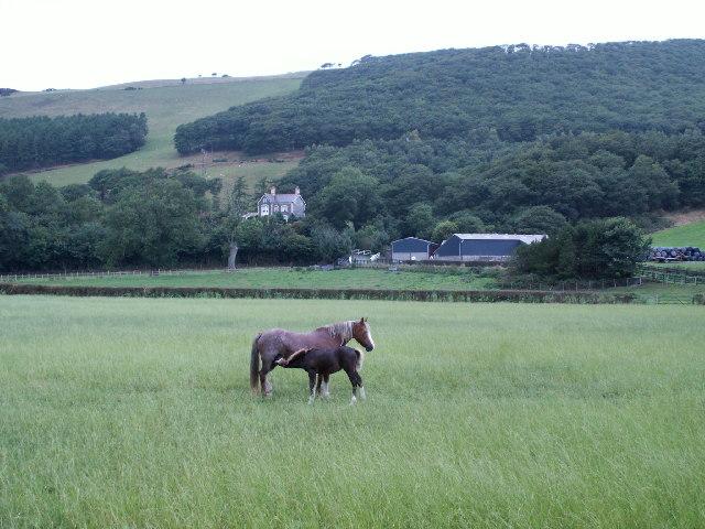 Neuadd Parc, Rheidol valley