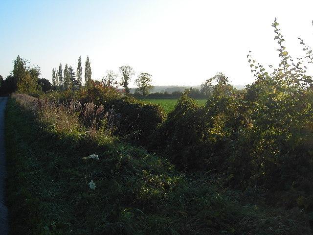 Hedgerow near Somerby