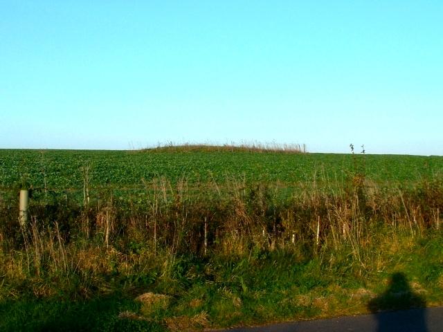 Tumulus on Teglease Down, East Meon, Hampshire