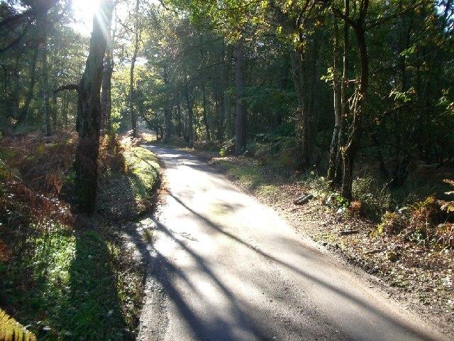 Row Lane, Winterfold Heath