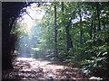 SJ4188 : Autumn sunshine in Childwall Woods by Sue Adair