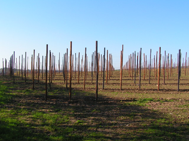 Hop Field, near Horsmonden