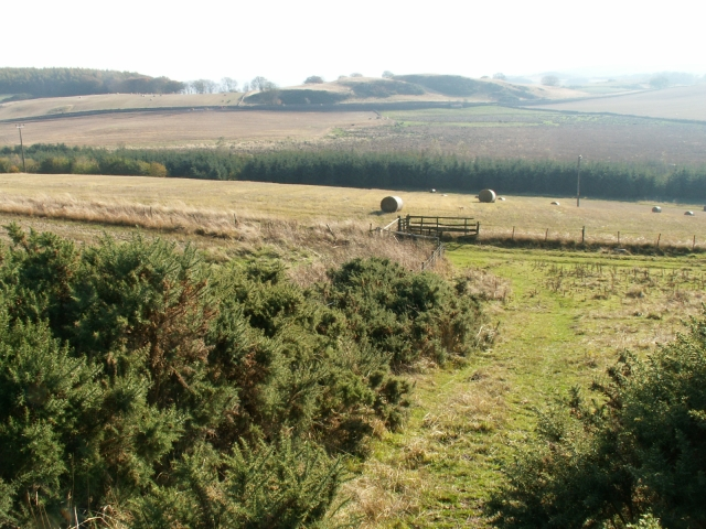 Whins, plantation and a track by Logie
