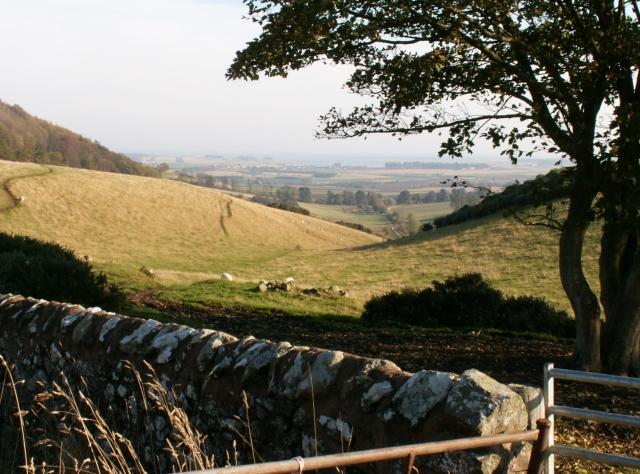 Gully and farmland by Logie