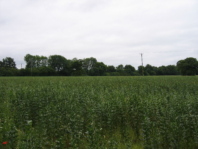 Beanfield in the Arrow Valley