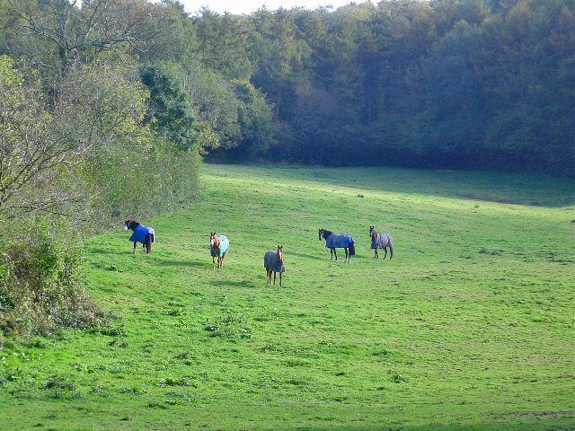 Horses at Gatcombe
