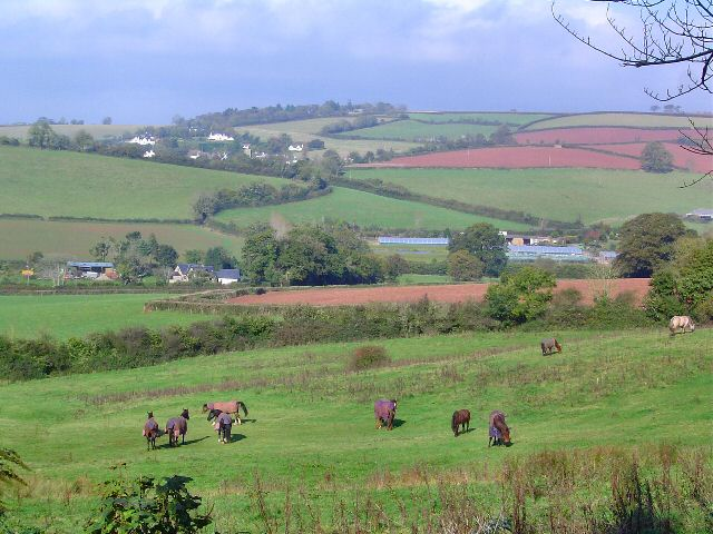 Horses near Kingskerswell