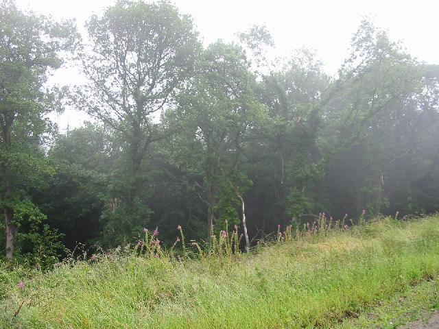 Shobdon Hill Wood