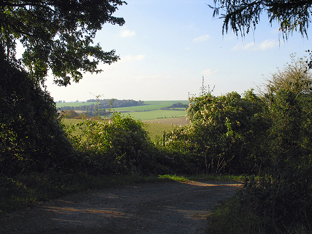 Buttsfield Track and surrounding fields