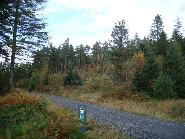 Trees on Knowe Happle