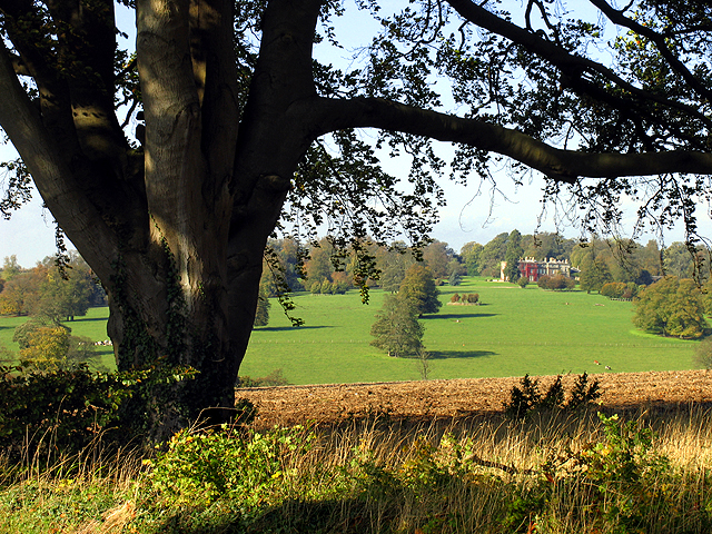 Tree on Farmland near Woolley Home Farm