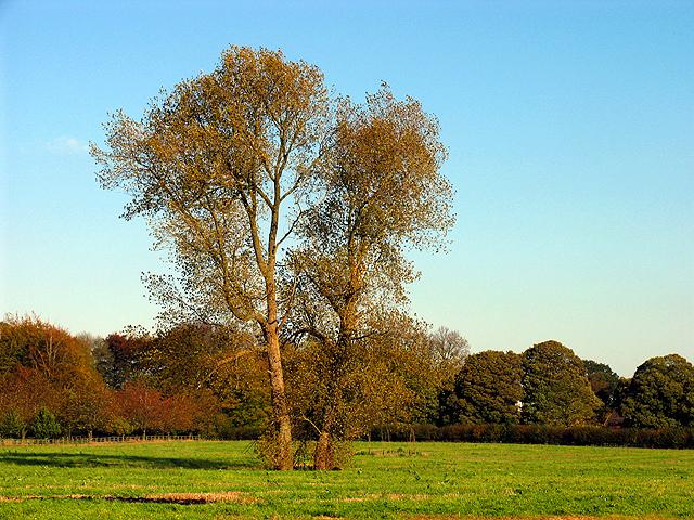 Tyneys Green near Leckhampstead Thicket
