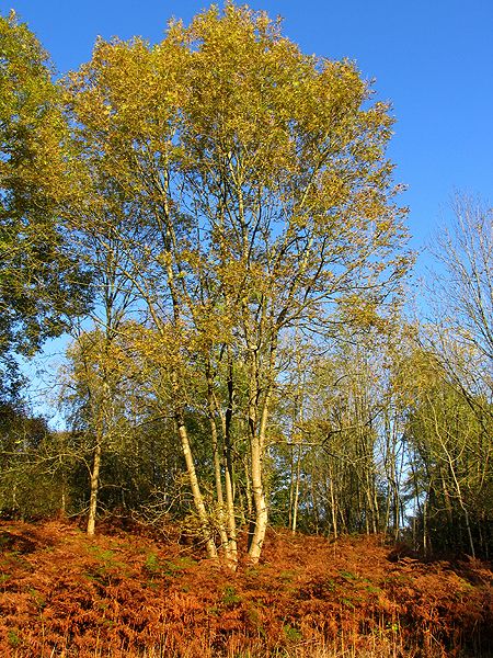 Autumn in Winterbourne Wood