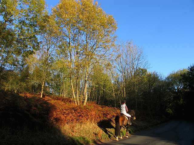 Horse riding through Winterbourne Wood