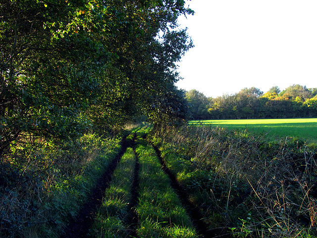 Track through Popes Wood